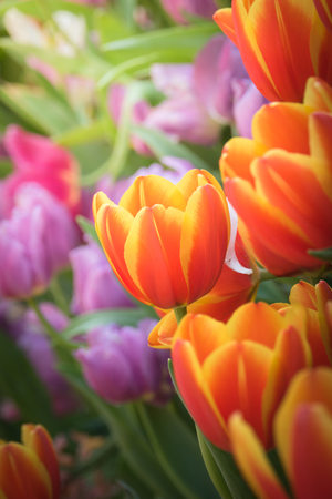 Beautiful bouquet of tulips. colorful tulips. nature background Stockfoto