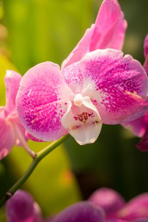 Obraz tła kolorowych kwiatów, natura w tle