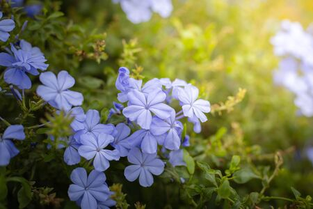 The background image of the colorful flowers, background nature