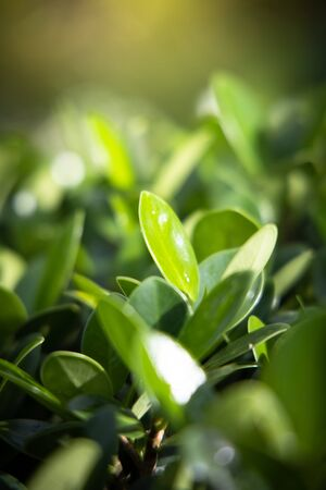 The background image of the leaves, background nature 免版税图像