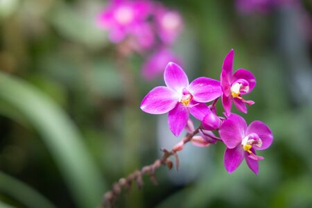 Beautiful blooming orchids in forest, On the bright sunshine 版權商用圖片