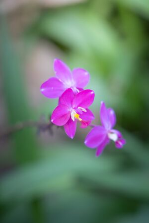 Beautiful blooming orchids in forest, On the bright sunshine Standard-Bild