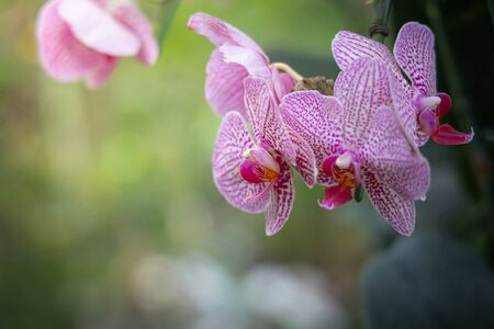 Beautiful blooming orchids in forest, On the bright sunshine Stock fotó
