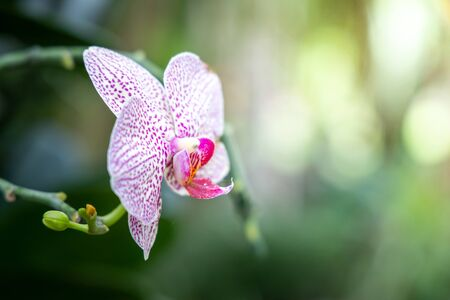 Beautiful blooming orchids in forest, On the bright sunshine Stok Fotoğraf
