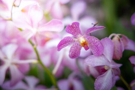 Schöne blühende Orchideen im Wald, bei strahlendem Sonnenschein