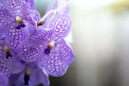Beautiful blooming orchids in forest, On the bright sunshine