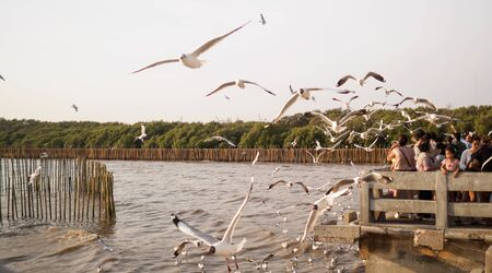 Seagull grabs a piece of bread on the railing, flock of seagulls on the seashore, close photo of the seagull, seagull in flight - Image
