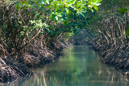 mangrove: Mangrove Stock Photo