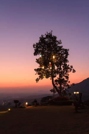 orenge: silhouette tree with hanging light on during the sunset