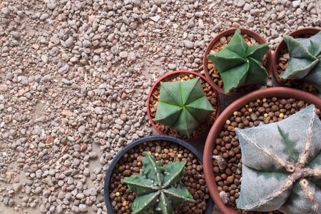 water plants: Five star shape cactus on the stone floor