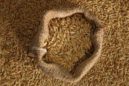 barley seed pile bag Sack photo