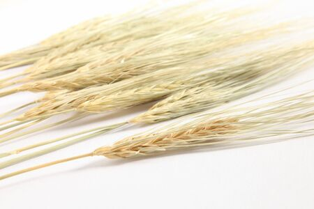 malto d orzo: orecchio di riso orecchio orzo di risone