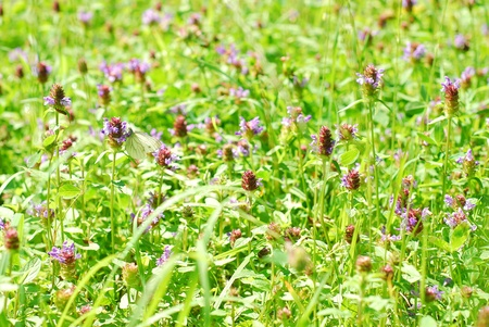brihgt meadow with blooming cover in sunny summer day photo