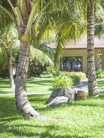 hon: a beautiful palm-lined beach view from Vietnam Hon Tre island.