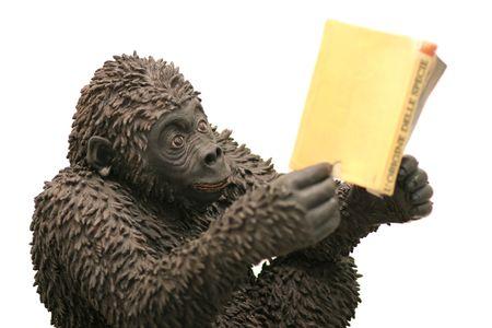 habituation: monkey reads a book - isolated white Stock Photo