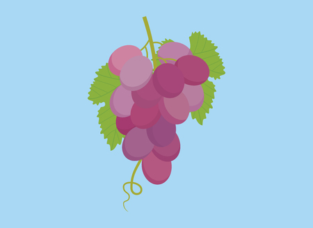 isabella: grape violet isolated with green leaf and blue background vector