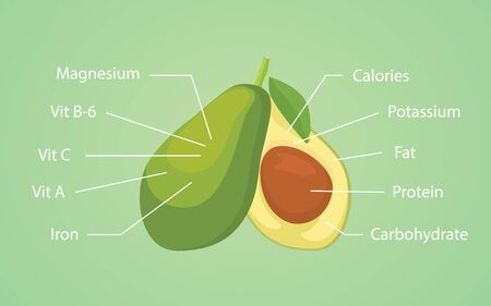 nutrient: avocado nutrition nutrient vector graphic illustration
