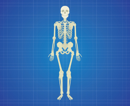 bony: human skeleton with white color single isolated vector graphic illustration