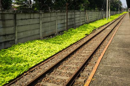 prosta kolej dla linii podmiejskiej z zielonymi krzakami zdjęcie zrobione w Depok Indonesia Zdjęcie Seryjne