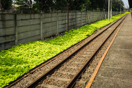 straight railway for commuter line with green bushes photo taken in Depok Indonesia Stock fotó