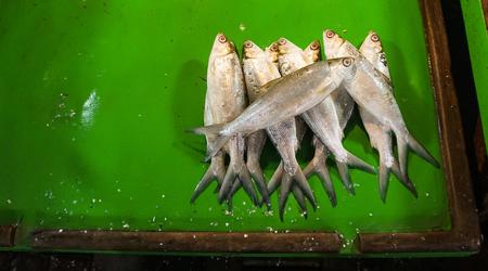 Mound of milkfish on green plastic table photo taken in Jakarta Indonesia