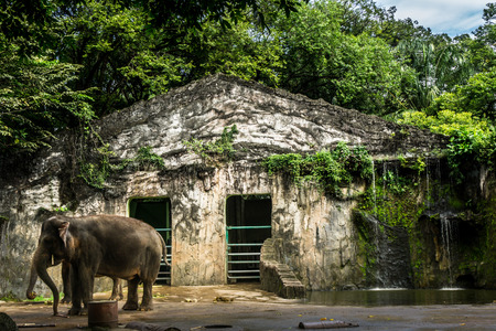 elephants cage with little waterfall and pond photo taken in Jakarta Indonesia