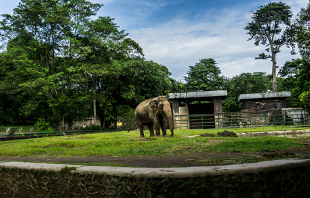 A big elephant in the cage with pool surrounding by fence and trees and beautiful sky as background photo taken in Ragunan zoo Jakarta Indonesia