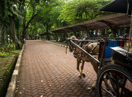 jakarta: Dokar or horse-drawn carriage on pavement photo taken in Jakarta Indonesia