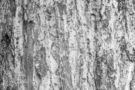 wood jati texture with black and white color taken in central java indonesia