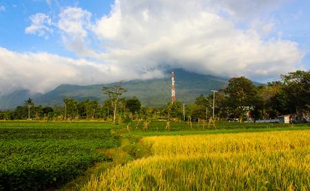 padi: Landscape Mountain blue sky with beauty padi field Stock Photo