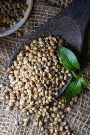 Cooking Spices, Coriander Seed on wooden spoon photo