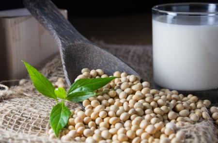 soya: leche de soja con soja Foto de archivo