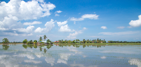 Paddy field with blue sky photo