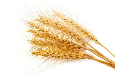 wheat grass: Wheat isolated on white Stock Photo