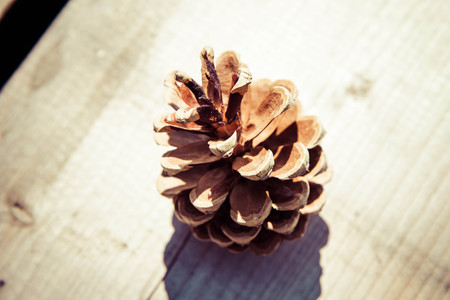 pine needles close up: Pine cone on a wooden table