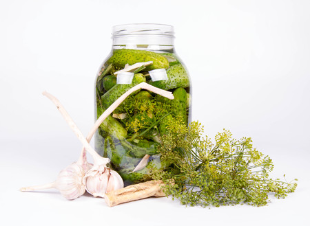 marinated gherkins: Brined pickles in a jar, with all the ingredients for making them (garlic, dill and horseradish)