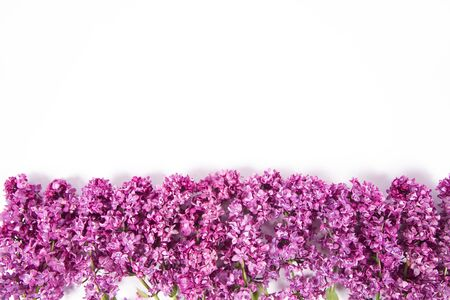 Lilac flowers on a white background with text space above Archivio Fotografico