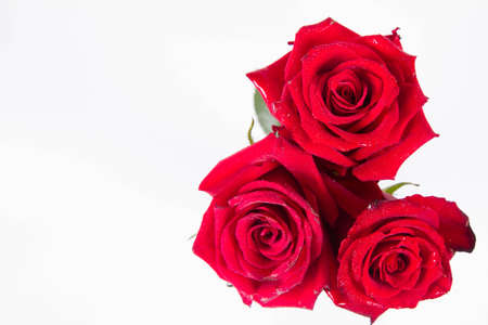 Red roses, seen from above, on a white background