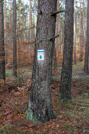 Hiking path symbols on a tree in a shape of a christmas tree and a blue trail