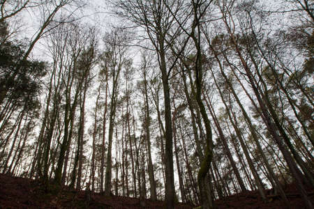 Forest in winter seen upwards from the bottom of a gorge, against the cloudy sky
