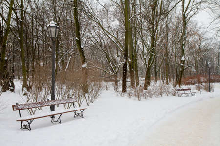 Snow covered alley in a park in winter Banque d'images