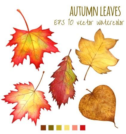 가을은 흰색 배경에 물 컬러 잎 일러스트