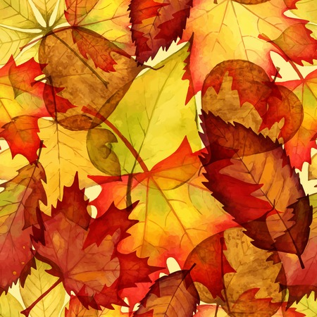 autumn leaves  watercolor  background Vector