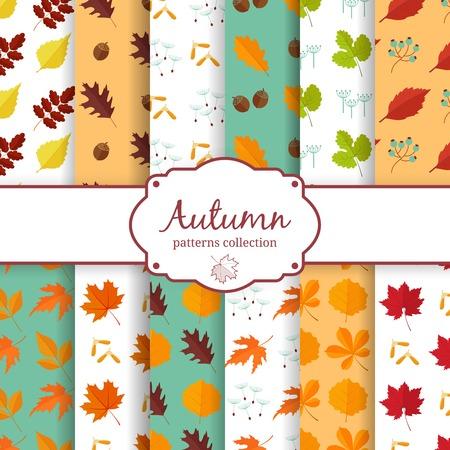 chokeberry: Autumn seamles backgrounds set