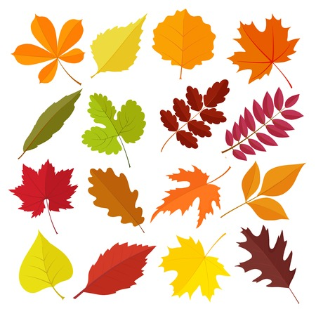 flat leaf: set of autumn leaves Illustration