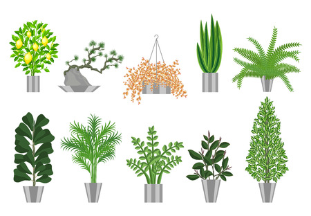 Big and smoll trees house plants collection. Large houseplants in pots for decoration of interiors. Vector illustration house plants in pots isolated on  white background. Bonsai, lemon tree,ficus ,palm, ferns and other home plants. Illustration