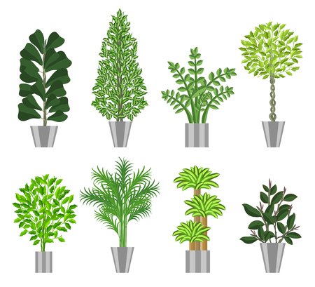 pot leaf: Big trees house plants collection. Large houseplants in pots for decoration of interiors. Vector illustration house plants in pots isolated on  white background