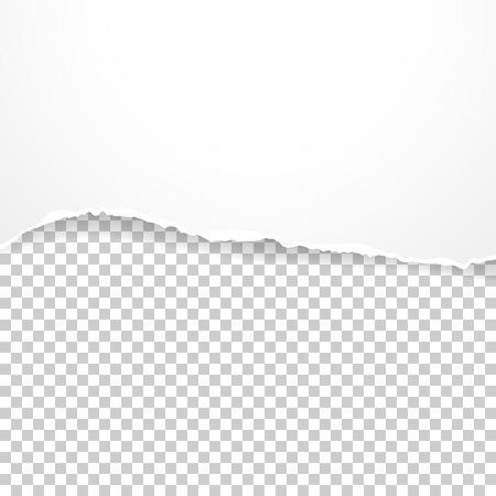 Torn paper banner on the transparent background. Illustration