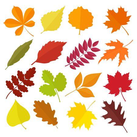 chokeberry: Autumn leaves set, isolated on white background. Cartoon flat style, vector illustration.