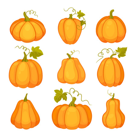stalks: Pumpkins set. Agricultural plant isolated on white background. Orange and yellow pumpkins with leaves and stalks. Cartoon flat style vector illustration